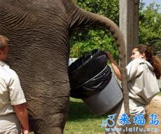 The Most Dangerous Job in Zoo