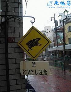 日本人怕羊?