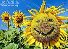 微笑的向日葵