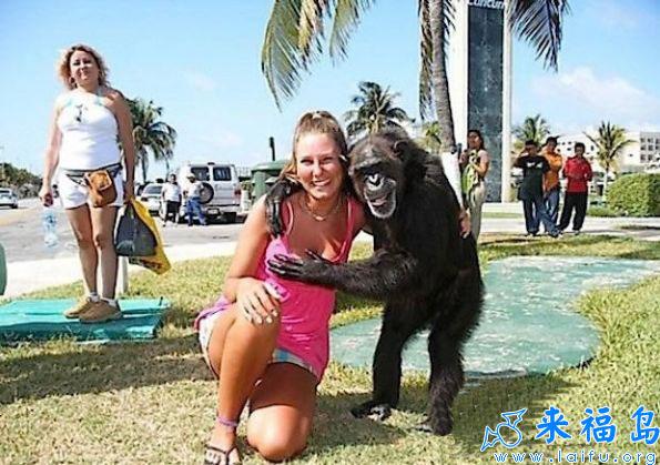 黑猩猩一点都不老实啊