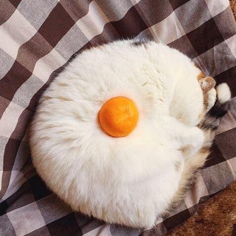 这煎蛋长毛了[动物图片]