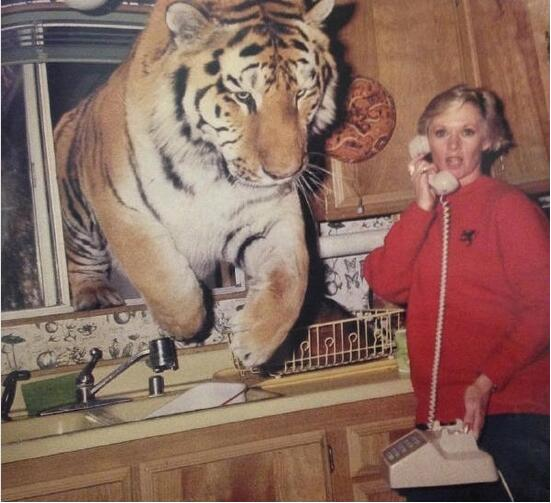 动物园老虎跑出来了