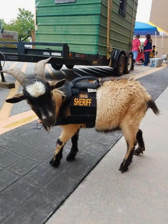 防爆山羊?