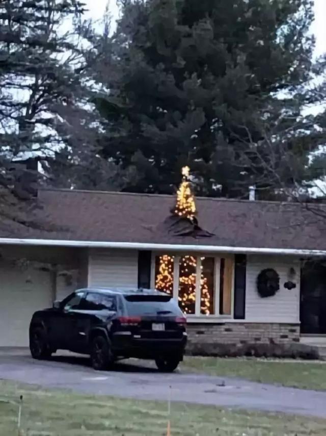 我家的圣诞树今年长大了[奇闻怪事]