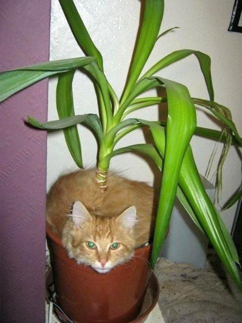 花盆放的久了都张猫了