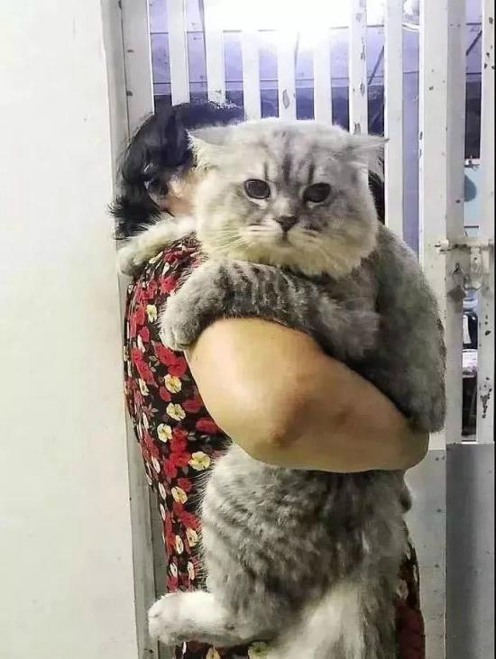 奶奶喂大的一頭貓