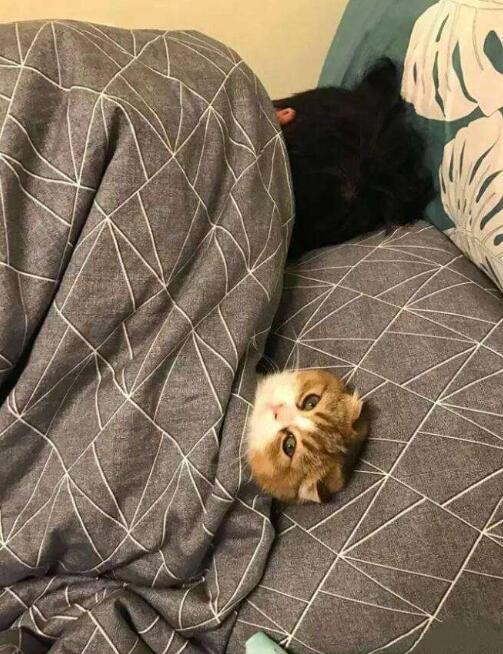 去睡沙发吧!这里没有你的位置了!