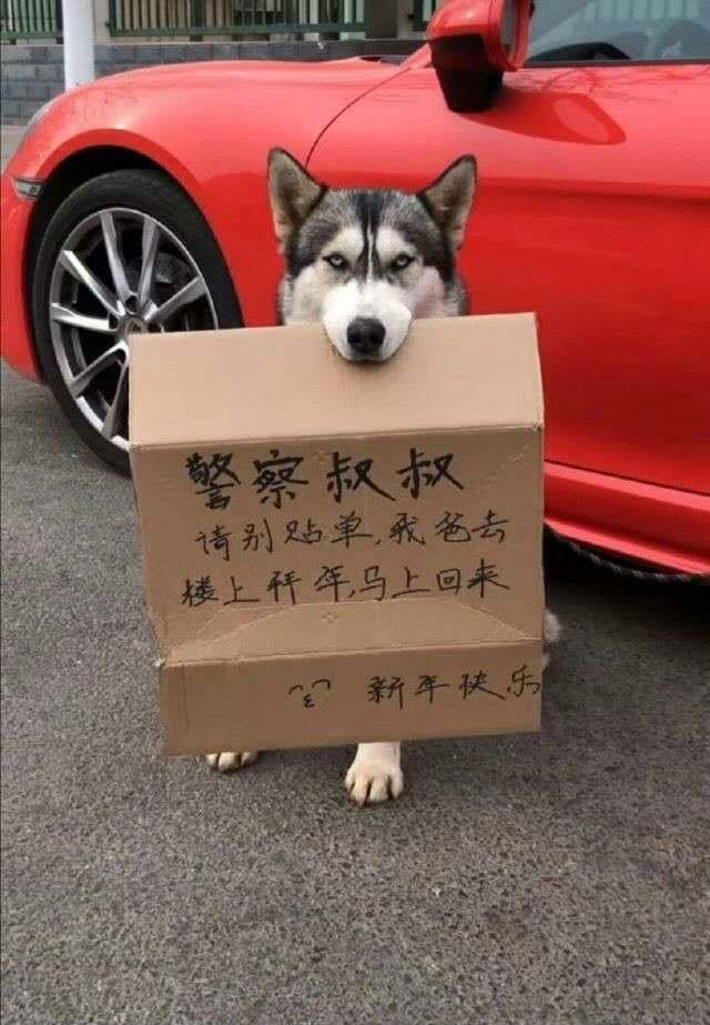 请看在狗的面子上一定要罚