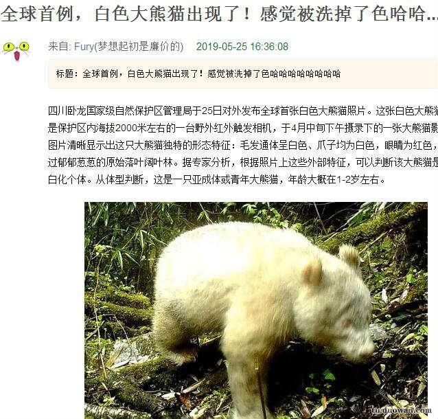 看样子是一只从来熬夜的熊猫