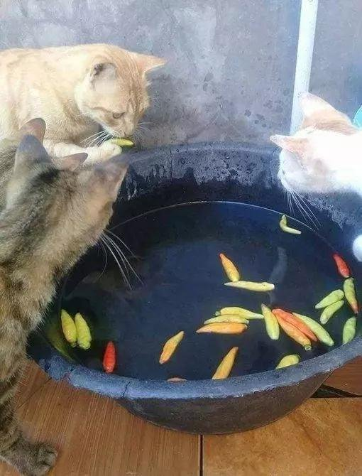 好奇害了貓