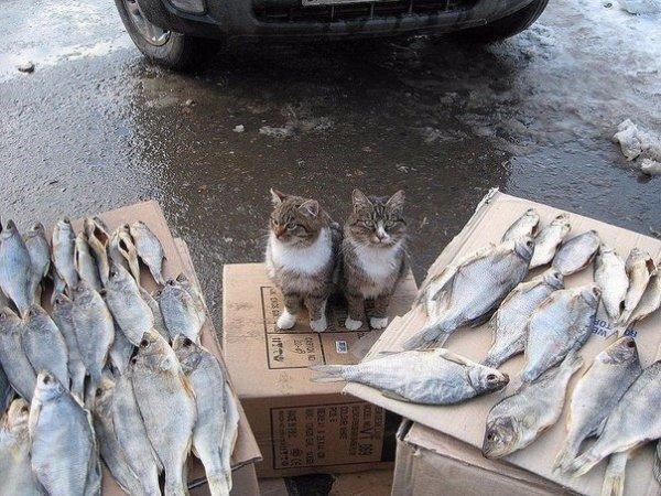 老板這魚怎么賣的