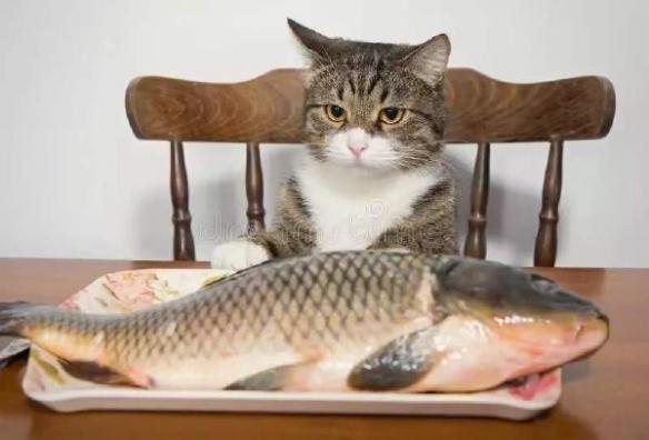 心有魚而力不足