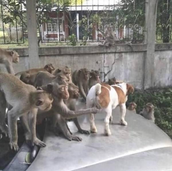 """下面我来讲解一下""""猴子偷桃""""第一式"""